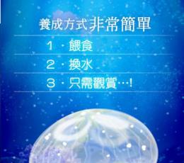 海蜇手游下载_海蜇游戏安卓版下载V1.1