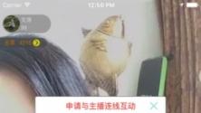 蜜柚直播V1.1 iPhone版