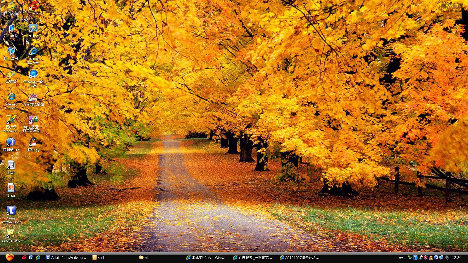"""魔法桌面一树黄花电脑桌面主题,使用湖北省随州市洛阳镇的银杏风景做为壁纸。银杏生长较慢,寿命极长,从栽种到结果要二十多年,四十年后才能大量结果,因此又名""""公孙树"""",有""""公种而孙得食""""的含义。寿命可达千余岁,存世3500余年大树仍枝叶繁茂果实累累。是树中的老寿星。在山东日照浮来山的定林寺内有一棵大银杏树,相传是商代种植的,已有3500多年历史了 尊敬的用户,此软件捆有插件,是选项安装,如果你不想安装插件,安装该软件时请注意选择,安装时有的杀毒软件可能会报毒,请注"""