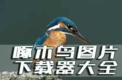 啄木鸟图片下载器大全