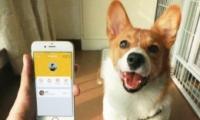 支付宝app宠物码申请方法教程