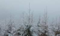 北京门头沟下雪是怎么回事 北京门头沟下雪是什么情况