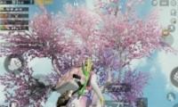 绝地求生刺激战场樱花树位置坐标介绍