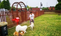 杭州公共遛犬区是怎么回事 杭州公共遛犬区是什么情况