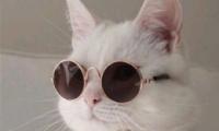 微信情侣头像猫咪搞怪可爱 萌宠情侣头像大全