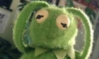 朋友圈青蛙到底先开啥青蛙头像试题解析