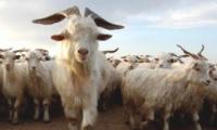 """""""嘲羊群众""""是什么梗 """"张艺兴嘲羊群众""""是什么意思"""