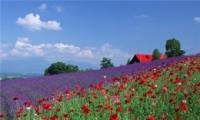 微信最吉利的好看头像风景花卉 唯美又吉利的微信风景头像
