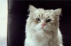 类似猫咪的看片软件