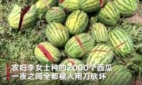 2000个西瓜被砍烂是怎么回事 2000个西瓜被砍烂是什么情况