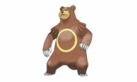 《精灵宝可梦:究极之日月》圈圈熊配招推荐
