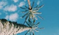 微信头像真实花草风景图片唯美大全 有气质有意境的风景头像