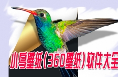 小鸟壁纸(360壁纸)软件大全
