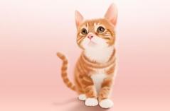 小猫咪直播APP合集