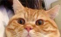 微信猫咪头像可爱搞怪 2020最新萌猫咪头像大全