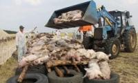 韩国首现非洲猪瘟是怎么回事 韩国首现非洲猪瘟是什么情况