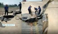 三峡水怪被打捞是怎么回事 三峡水怪被打捞是什么情况
