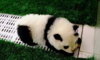 将狗染色成熊猫收费1500是怎么回事?