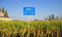 亩产1365公斤是怎么回事 亩产1365公斤是什么情况