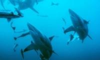 海洋含氧量下降是怎么回事 海洋含氧量下降是什么情况