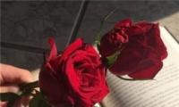 2020年情人节图片唯美浪漫 情人节红色玫瑰花图片大全