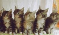 抖音五只猫摇头评论发送方法教程