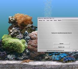 热带鱼屏保怎么喂鱼_