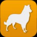 中国宠物商城 V1.0 安卓版