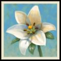 心灵花园 V2.13 安卓版