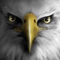 老鹰模拟飞行(Eagle Play) V1.0 安卓版