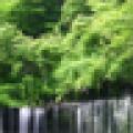 魔幻桌面-森林安卓版