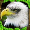 老鹰模拟器 V1.0 安卓版