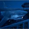 深海恐惧VR电脑版