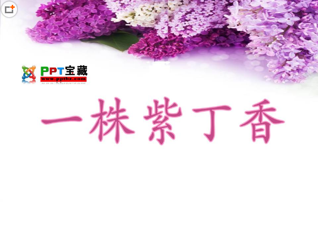 一株紫丁香PPT课件