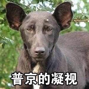 明星撞脸动物表情包 图片预览
