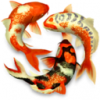 Koi Pond 3D for mac V1.2.0 官方版