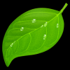 Coda for MacMac