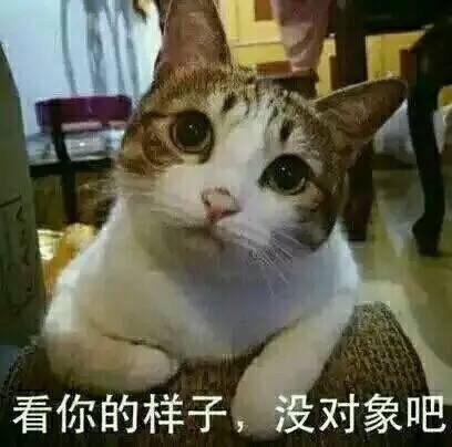 人民的猫奴表情包_人民的猫奴表情包高清无水印版下载