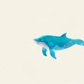 巨鲸直播私密房间共享免费版安卓版