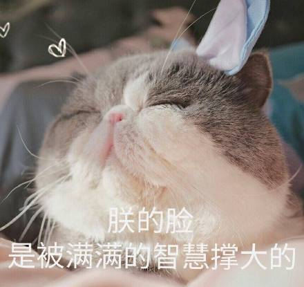 矮基猫可爱表情包下载_矮基猫表情包呆萌表情包高清版