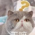 矮基猫表情包