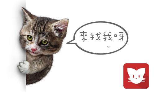 猫咪APP最新下载地址
