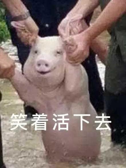 一只微笑的猪表情安卓版大图预览_一只微笑图上帝的凝视搞笑图片