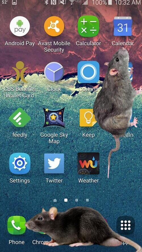 大鼠在屏幕上V1.0 安卓版