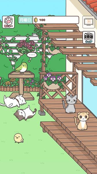 猫咪饲养日常V1.0 苹果版