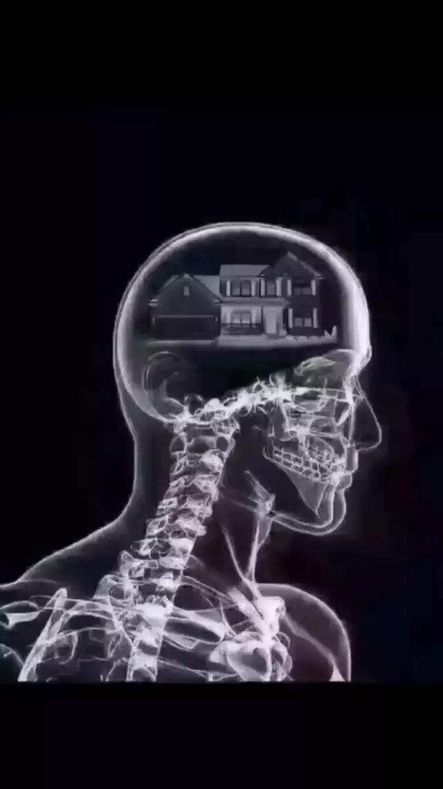 抖音脑子ct图里面全是你表情包 v1.0 官方版 图片预览图片