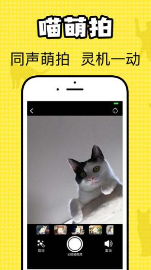 猫咪翻译官V1.0 苹果版