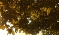 秋季深色唯美风景个性皮肤