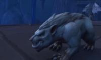 魔兽世界9.0猎人宠物刷新地点大全