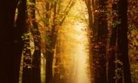 2021关于秋天的唯美又治愈的文案 最新版秋季发朋友圈的短句